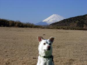 富士山とピク