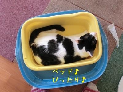 それは子猫のトイレ・・・