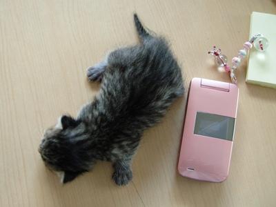 5月の子猫 大きさ比べ