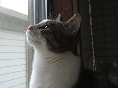 外を見るのが好き