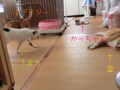 伸びる猫と伸びない三毛猫