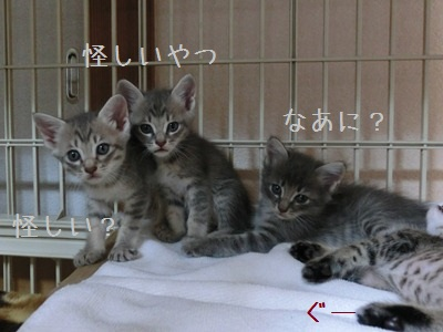 6月の子猫