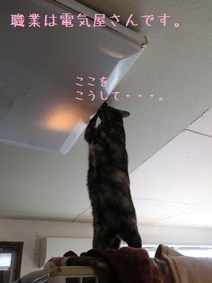 電気がつかない?