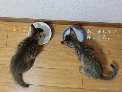 もう食べちゃった・・・