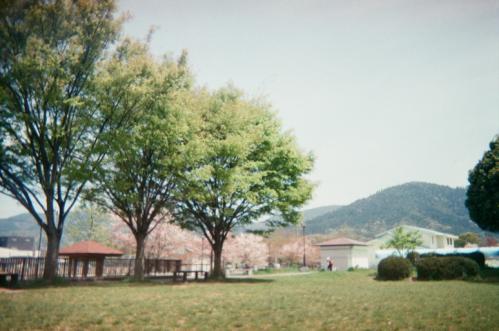緑の木々と桜
