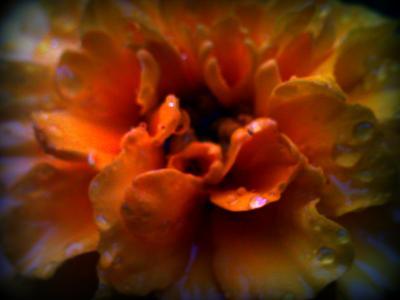 マクロな花
