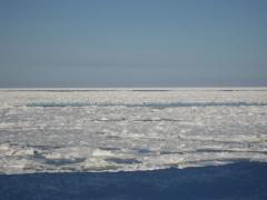 流氷2011