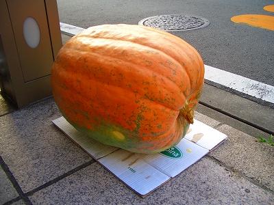2011 三島 中央町 ハロウィン・パレード 仮装