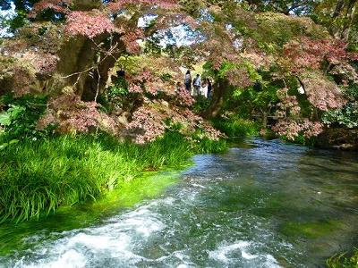 楽寿園 三島 静岡 観光名所 市立公園