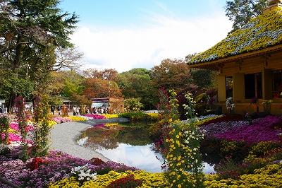 楽寿園 菊まつり 平成23年 中尊寺 大型盆景