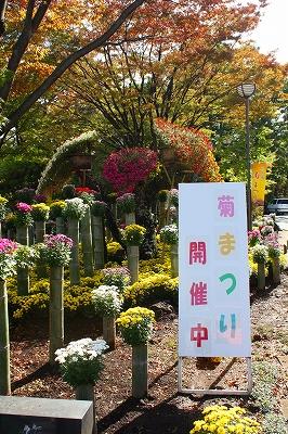 楽寿園 三島市立公園 秋 菊