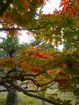 隆泉苑 2011 三島市 紅葉