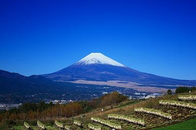 富士山 芙蓉台 景観 ビューポイント 冬