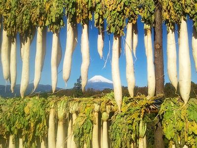 23年 大根干し 三島 富士山