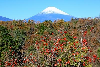 富士山 静岡 三島 ビューポイント 2011 12月 坂小学校