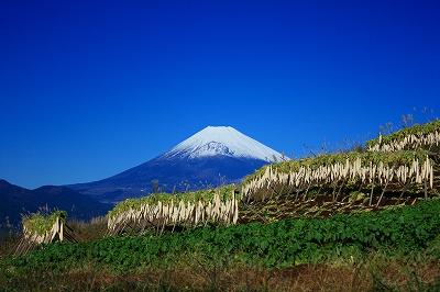 富士山 三島市 芙蓉台 大根干し