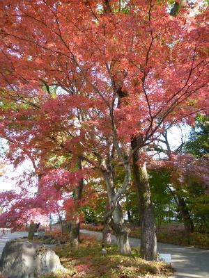 楽寿園 駅前口 紅葉 11月 見ごろ 三島市