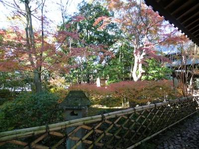三嶋大社 紅葉 12月 平成23年 2011 三島市