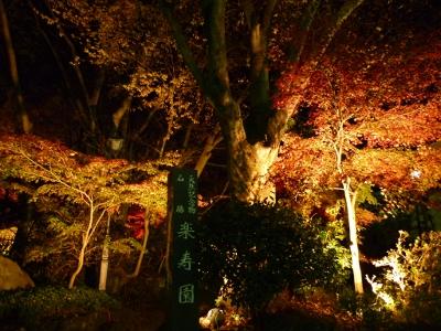 楽寿園 紅葉ライトアップ 正門 三島市 2011