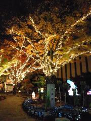 楽寿園ライトアップ_1