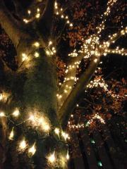 楽寿園ライトアップ_3