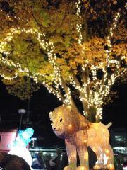 楽寿園ライトアップ_4