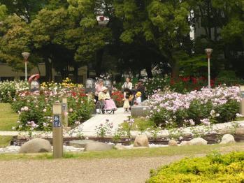 靫公園のバラ03