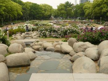 靫公園バラ02