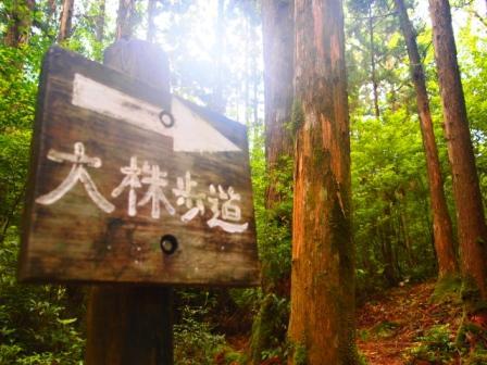 2011.5.28-6.1 屋久島旅 060