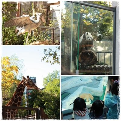 11.08上野動物園