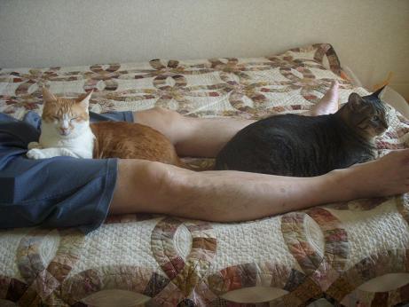 貧乏暇なし猫じゃらし