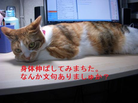 jiko3.jpg
