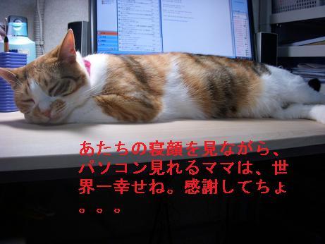 jiko5.jpg