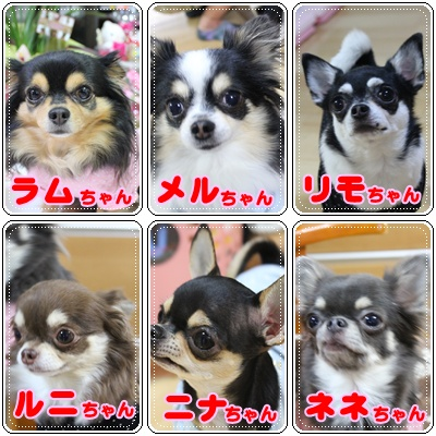 6姉妹ちゃん