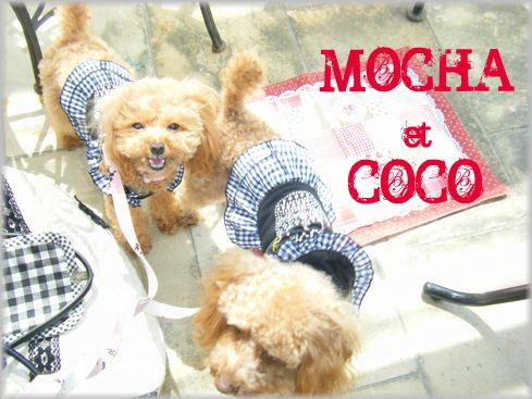 モカ&ココ