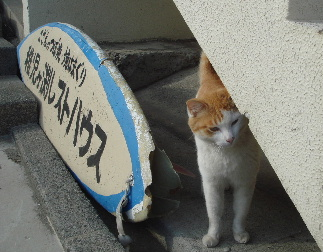 20110416cat.jpg