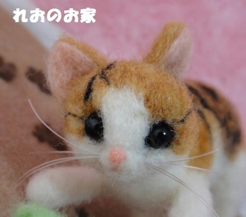 バッタ子猫5