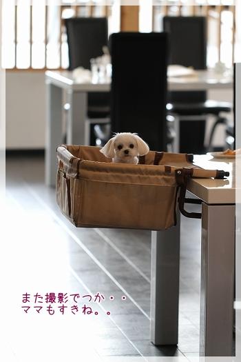 カフェデビュー後編4