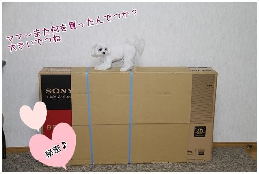 テレビ買いました1