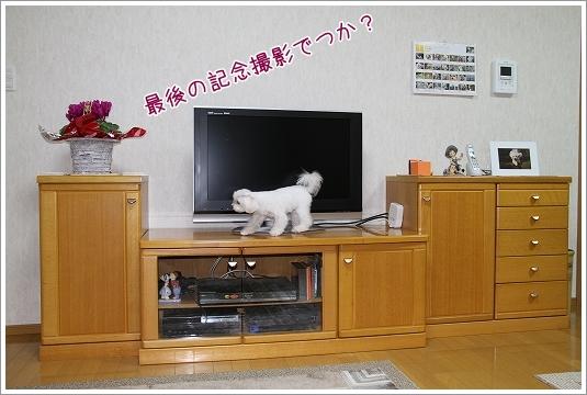 テレビ買いました2