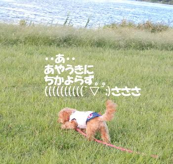 琵琶湖モコちゃん
