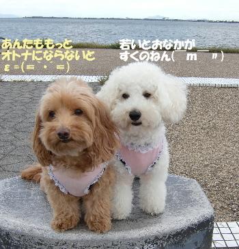 琵琶湖3-1