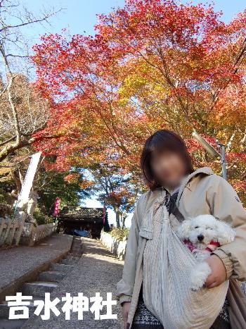 吉水神社で