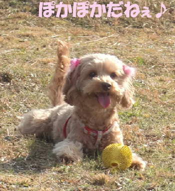画像 030Aモコ