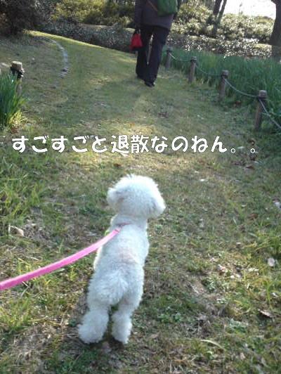 散歩みゆA