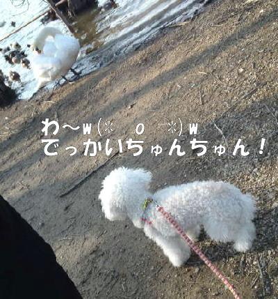 白鳥とみゆA