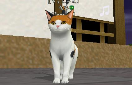 Enaneus:庵猫