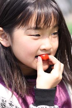 夢ファームあらかわ いちご園 村上市観光果樹園
