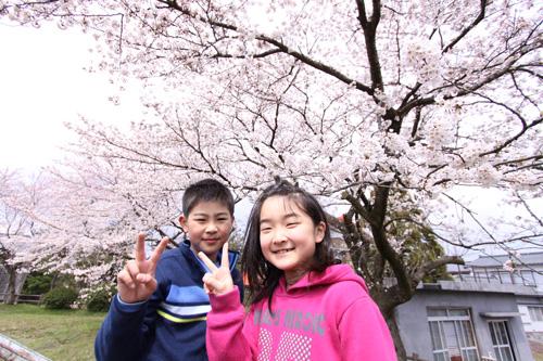 日本海側 村上市 桜の花見