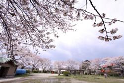 幼なじみ 桜の花見